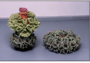 Pod Flower Enlarged, Cactus Pod